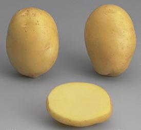 la pomme de terre Agata