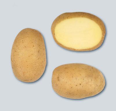 aardappel Artemis