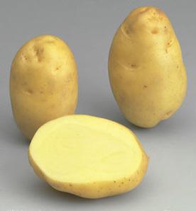 potato Bintje
