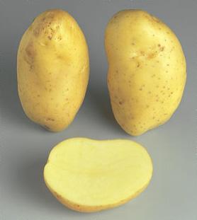 la pomme de terre Daisy