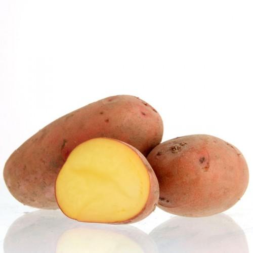 Laura vari t de pomme de terre bruwier potatoes - Variete pomme de terre rouge ...
