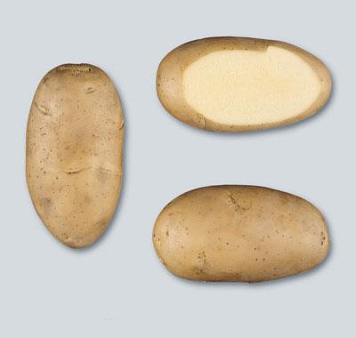 potato Liseta