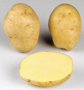 potato Marabel