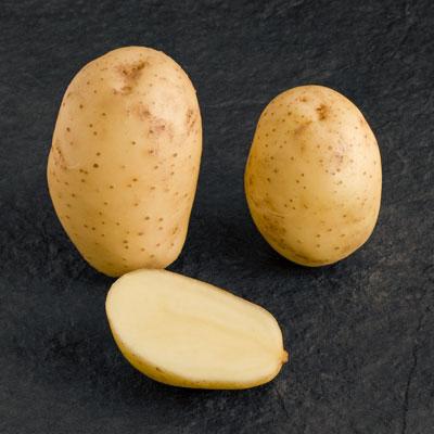 la pomme de terre Melody
