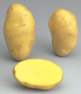 potato Nicola