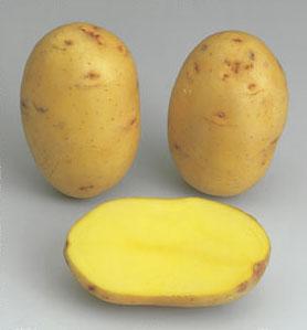 potato Victoria